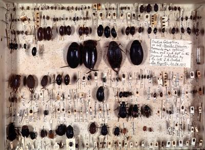 darwins_beetles