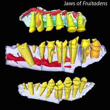 fruitadens