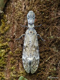 Lanternfly photograph